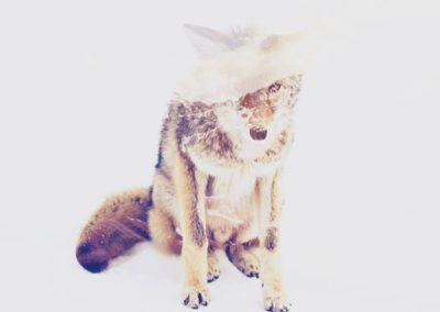 fotomontajes animales